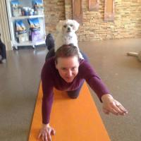 Do you DOGA?